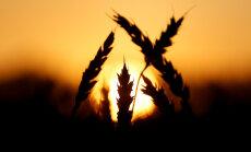 Venemaa supleb nisuvarude sees, eksport on aga nigel