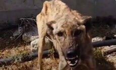 Hingepuudutav VIDEOLUGU | teekond nälginud ja hirmunud koerast südamliku perelemmikuni
