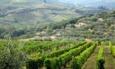 В Италии открылся город-музей, посвященный винам