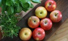 Kas teadsid, milline osa õunast on kõige tervislikum? Vaata järele!