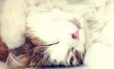 Õnnelik kass, õnnelik elu: 5 märki, et Sinu kass Sind tõeliselt armastab