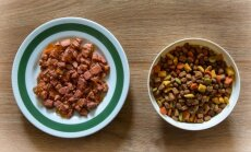 Kumb on kassi tervisele parem - kas kuivtoit või märgtoit? Mida eelistada?