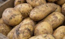 Молодой картофель начинает заполнять прилавки
