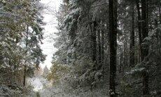 Kuidas leida oma metsa andmeid?