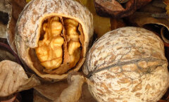 Lööv GALERII: 10 toitu, mis näevad välja täpselt sellised nagu need osad kehast, millele nad kasulikud on
