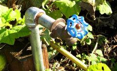 Kevadiste aiatööde aeg on käes: õpi selgeks taimede kastmise rusikareeglid