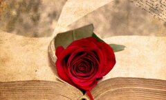 В Нарвской библиотеке пройдет День книги и розы