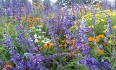 Druiidide lillehoroskoop: mida sinu lill sinu kohta räägib?