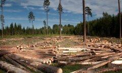 Soomlaste 50 miljonit eurot maksev vineeritehas tuleb ilmselt Lõuna-Eestisse