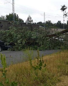 VIDEO | Tallinnas kukkus puu parkivate autode peale