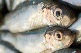 Эстония экспортирует 85% своей рыбной продукции