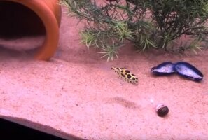 VIDEO: Loomad vs laserid! Vaata, kuidas reageerib laserile näiteks kala!