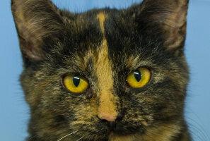 KODULEIDJA: Aita sarmikate vuntsidega kassipoeg Saskia jõuluks koju