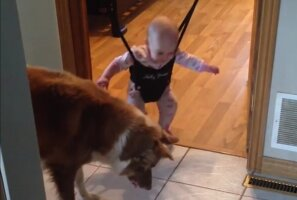 Üliarmas VIDEO: Vaata, kuidas koer beebile hüppamise selgeks õpetab!