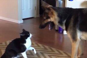VIDEO: Koer ja kass tõrelevad üksteisega kõige armsamal moel, oota ära kassi üllatuslik reaktsioon!