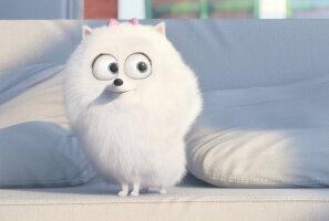 """ARVUSTUS: Vaata, millest räägib armas koguperefilm """"Lemmikloomade salajane elu"""""""