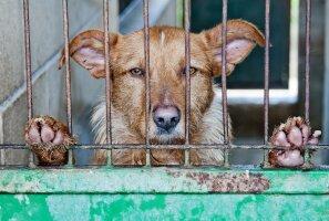 Marianne Mikko: Eesti võimuses on piirata illegaalset äri lemmikloomadega