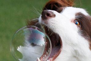 Ära usu! 12 koerte kohta käivat müüti, mille spetsialistid ümber lükkavad