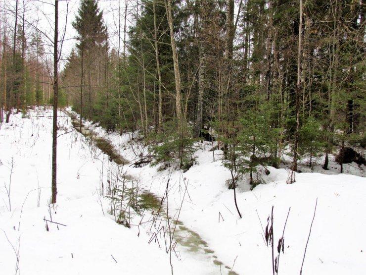 Leili metsalood | Sulalumi ja kraavides vesi