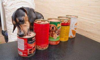 Выбираем качественный корм: сколько мяса в собачьих консервах?