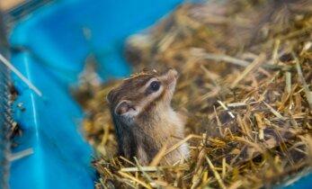 DELFI FOTOD ja VIDEO: Tallinnas toimunud Zooexpol sai näha ja katsuda kasse, närilisi, küülikuid, madusid ja teisi loomi