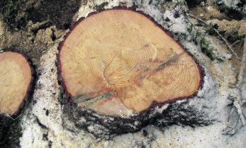 Klassikalised metsavargused on tänapäeval pea olematud
