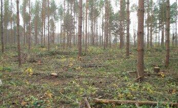 Viljandimaa 2000: roheline Niva, mõõdulint ja kirjutusmasin ning 120 kriminaalasja aastas