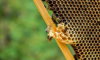 Mesinikud, kes teevad tööd selle nimel, et Eesti mesi oleks puhas, väärtuslik ja selle maine kõrge