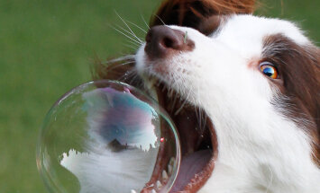 Purustame müüdid: 12 koerte kohta käivat müüti, mille spetsialistid ümber lükkavad