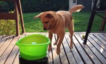 Lustakas VIDEO: Masin loobib koerale muudkui palle ja kuts lausa tantsib rõõmust