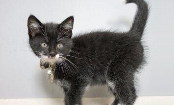 GRAAFIK: Vaata järele, millest räägib kassi saba tema meeleolu kohta