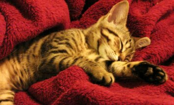 Heauskselt uuele omanikule antud kassipoeg visati tänavale