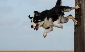 Ise oleme süüdi: 5 halba käitumisharjumust, mida koeraomanikud ise oma lemmikule õpetavad