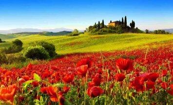 Появился новый информационный портал для путешествий по итальянской Тоскане