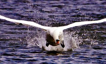 Loodusega silmitsi | Harrastusfotograaf Mati Vaus mere ääres