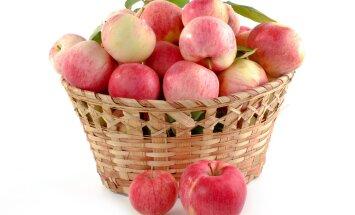 Kas tead, milline õunasort on eestlaste lemmik? Vaata järele!
