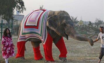 FOTOD: Indias koovad vabatahtlikud külma kartvatele elevantidele stiilseid kampsuneid