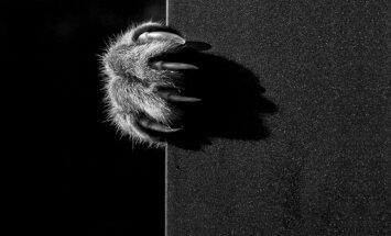 Võimsad FOTOD: Fotograaf on mustvalgete fotode kaudu üles jäädvustanud kasside müstilise elu