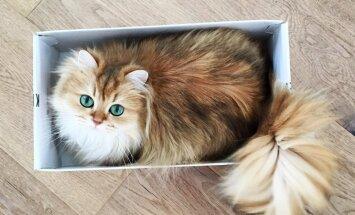 KLÕPSUD: Peeglike-peeglike seina peal, kas tema ongi kauneim kass ilma peal?