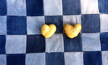 PÄEVAPILT: Südamekujulised kartulid teevad tuju heaks