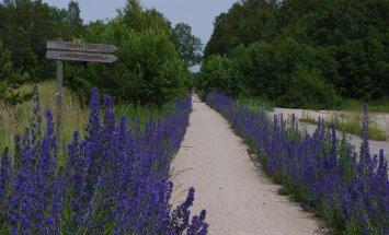 Rattaga Eestimaad avastama: vaata ja vali, milline neist viiest teekonnast sulle selleks suveks sobiks