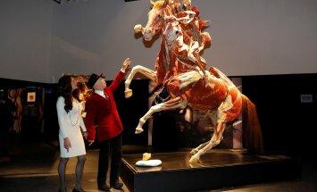 """""""Я консервировал лучшего друга"""": как создавались скандальные выставки человеческих тел"""