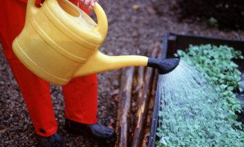 Vaata, kuhu poodi tasub praegu minna aiakaupu ostma: hinnavahe võib tulla väga suur