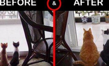 TOTAALNE MUUTUMINE! Vaata enne ja pärast pilte, kuidas väikestest kiisubeebidest suured nurrud sirgusid
