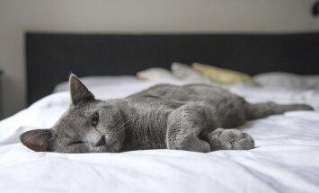 Millal peaks voodisse uue madratsi ostmise peale mõtlema?