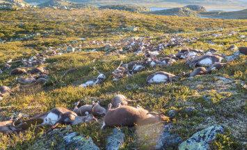 Norras hukkus ühe välgulöögi läbi enam kui 300 põhjapõtra