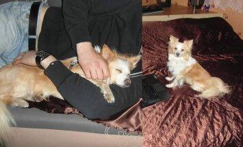FOTOD: Aita leida jõulude eel Rakveres kadunud koer nimega Jacky!