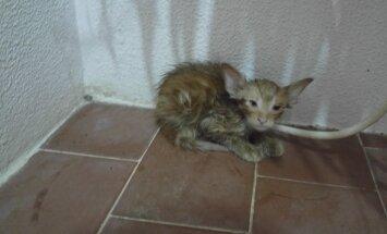 FOTOD: Elektrikapi taga lootusetult kinni olnud kassipoeg oli 42kraadises kuumuses juba hinge heitmas enne, kui ta lõpuks päästeti