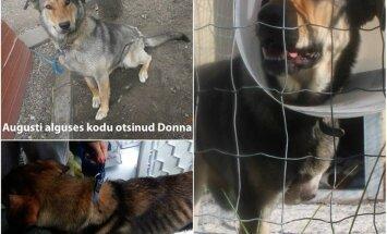 Südantlõhestav lugu: Donna, hoolimatute inimeste tegevusetuse all kannatav õnnetu saatusega kolmanda ringi koer vajab väga Sinu abi!