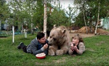 Maailma kõige sõbralikum karu? Abielupaar kasvatab hiigelsuurt mõmmikut, kes mängib palli ja armastab kodenspiima